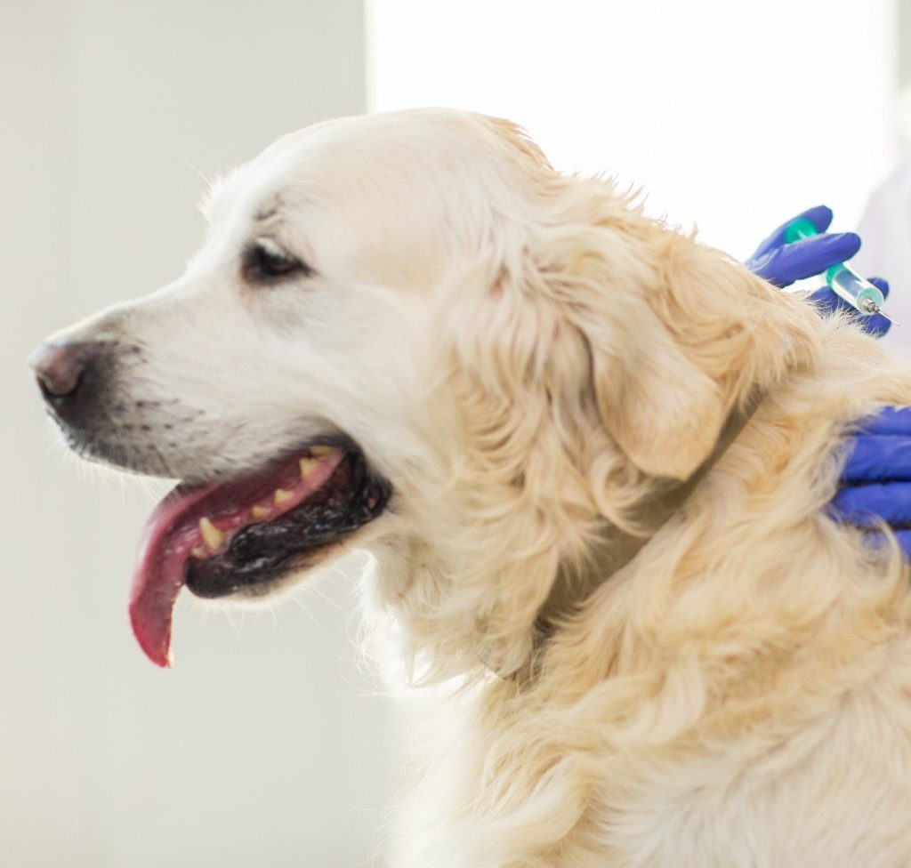 Pet Vaccine